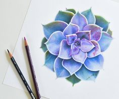 Succulent Drawing                                                                                                                                                                                 More