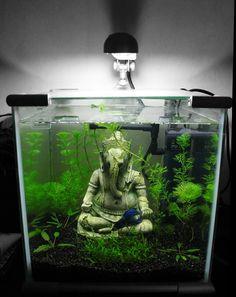 Nano aquarium, statue