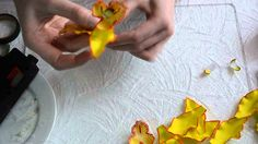 сборка цветка орхидеи