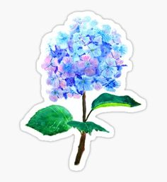 blue purple hydrangea Sticker