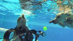 Underwater Puppies! Watch How Seth Casteel Got the New Shots