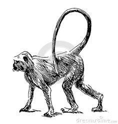 Hand sketch monkey