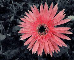 cute color splash photography - Google Search