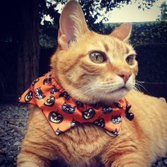 Yelloween chegando! ♡ #Yellow #Halloween #GatissimosHor #Amarelo #DiadasBruxas #Gatos #Animais #Miau #Catlove #Instacat #ManiadeGato #Catlovers #Meow #Pet #Katze #Chat #Kat