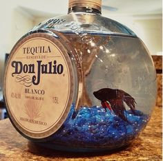 Tequila Don Julio Beta fish tank! I really want a fish for my desk at work. Empty Liquor Bottles, Liquor Bottle Crafts, Tequila Bottles, Alcohol Bottles, Diy Bottle, Bottle Art, Wine Bottles, Patron Bottle Crafts, Patron Bottles