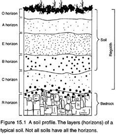 Types Soil Earth Science Second in addition A Ecb A E C Dd Eb C E Ag Science Th Grade Science additionally B Fe B C F Fee D B Db Ee C B Study Help Earth Science likewise B D Ccb E Ff C E F Aa Science Games Science Lessons furthermore F Ff E F C E Ff E. on soil texture worksheets earth science and school