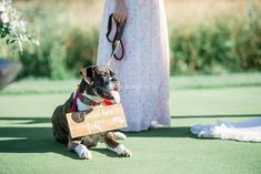 Photo Gallery - Weddingwire.ca Dream Catcher, Photo Galleries, Weddings, Gallery, Videos, Dogs, Animals, Dreamcatchers, Animales