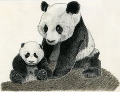 Image result for how to draw a realistic panda bear step by step