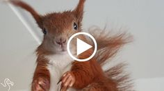 Man Rescues A Baby Squirrel And Shares His Life With Him