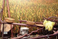 #ricecluster #expo2015 #milan