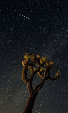 Perseids meteors: The Mojave Desert in Landers, California, USA