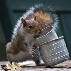 Squirrel snacking now stacking by berelaxed