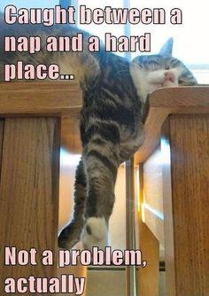#humor#animal#funny