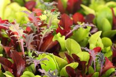 Top 10 veggies to plant in Spring