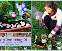 Getting Started with Fairy Gardens