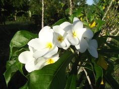 The beauty of Trinidad Trinidad, Nature, Plants, Beauty, Beleza, Flora, Cosmetology, Plant, The Great Outdoors