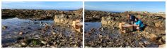 Release of four African penguins in Gansbaai over the weekend.