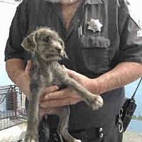 ## URGENT on 12/22 SAN BERNARDINO<<THEY KILL PUPPIES TOO!  https://www.adoptapet.com/pet/20278217-san-bernardino-california-terrier-unknown-type-medium-mix   a Terrier (Unknown Type, Medium) for adoption in San Bernardino, CA who needs a loving home.