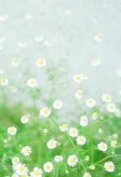 Spring flowers pinterest spring flowers and flower i love happy daisies mightylinksfo Images