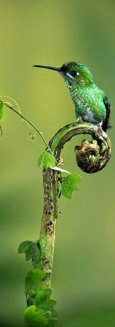 Fugl på en plante