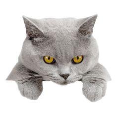 cats: 1 млн изображений найдено в Яндекс.Картинках ❤ liked on Polyvore featuring cats, animals, fillers, pets and animali