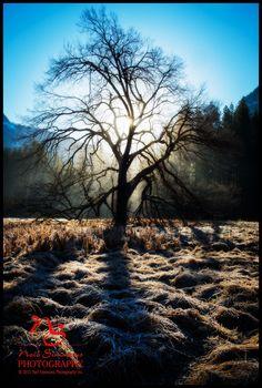 Yosemite | Neil Simmons Photography