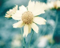 Flower Print Teal And Yellow Shabby Chic by Maddenphotography, $25.00