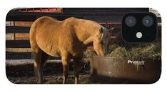 Gifts For Horse Lovers, All Is Well, Morning Breakfast, Female Photographers, Great Shots, Fantastic Art, Light And Shadow, Cool Artwork, Fine Art America
