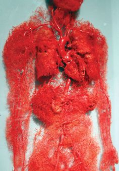 """Blood vessels in the human body - image from """"I fucking love science"""" The Human Body, Our Body, Life Science, Science And Nature, Weird Science, Gunther Von Hagens, Circulatory System, Medical Science, Forensic Science"""