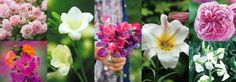 Grow more scented flowers