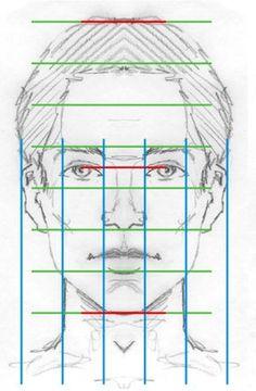 facial proportions