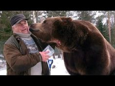 Finnish Man Has An Incredibly Close Relationship With the Fully Grown Brown Bears He Raised
