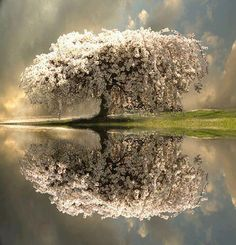 Only in quiet waters do things mirror themselves undistorted ~ Hans Margolius
