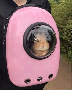 This is Major Tom to Ground Control. Pet Bunny Rabbits, Pet Rabbit, Ruby Rabbit, Bunny Bunny, House Rabbit, Rabbit Food, Cute Baby Bunnies, Funny Bunnies, Bunny Cages