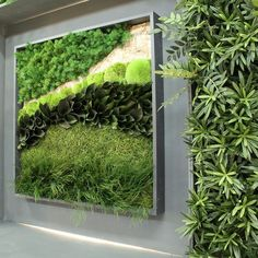 Preserved Moss Wall Art Pictures