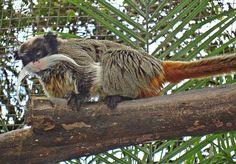 Bióloga da Fundação Zoo-Botânica participa de workshop  sobre pequenos primatas