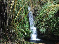 Bamboo Waterfall