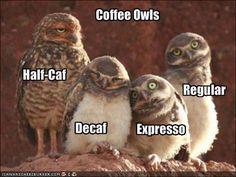 Coffee owls via icanhascheezeburger