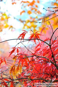 Fluro - Maple leaves