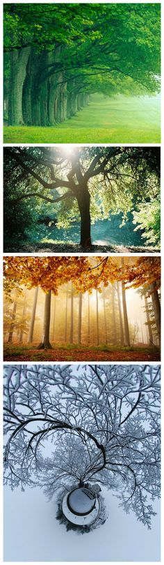 I love trees. Trees are beautiful.