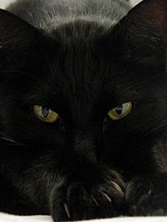 black cat...so tempting to put this on my Halloween board as well, what a look...