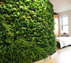 plantwall1