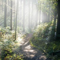 The Hobbit Trail. Florence, Oregon.