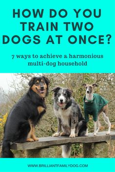 More dogs in your home doesn't have to mean mayhem! Read this post and learn how easy it is to train them all at once!