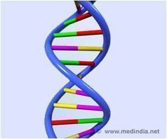 Researchers Identify Genes Behind Enlarged Brain Size, Cancer, Autism and Epilepsy