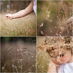beautiful summer meadow