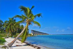 Bahia Honda State Park.  We took our picture under these trees.  Look for it on our Christmas cards.  LOL.  The Bridge in the background used to run railway on the bottom and vehicles on the top.