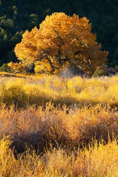 Northern New Mexico fall color.