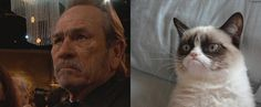 Tommy Lee Jones = Grumpy Cat | The 2013 Oscar Nominees And Their Animal Doppelgängers
