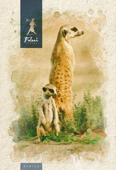 Namibia - Infografía para catálogo de viajes Kangaroo, Illustration, Movies, Movie Posters, Animals, Visual Identity, Sun Art, Photo Retouching, Visual Arts